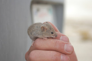 Image: My little mouse friend, by Todd Huffman, on Flickr