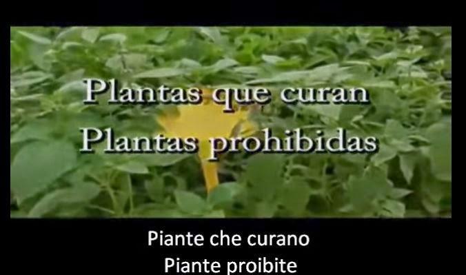 Piante Curative : La sentinella meditabonda le piante curative sono