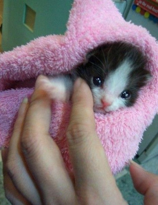 funny cat pictures, kitten in towel