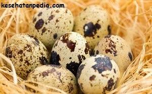 Manfaat Mengkosumsi telur puyuh