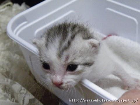仔猫の体重を量る