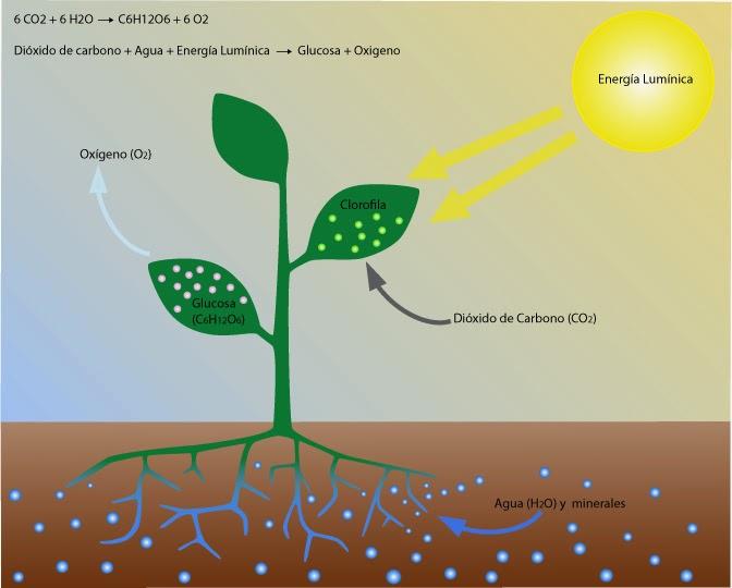 Plantas de regalo: El efecto de la luz en el crecimiento de las ...