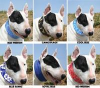 Hunde-Kühlhalsband