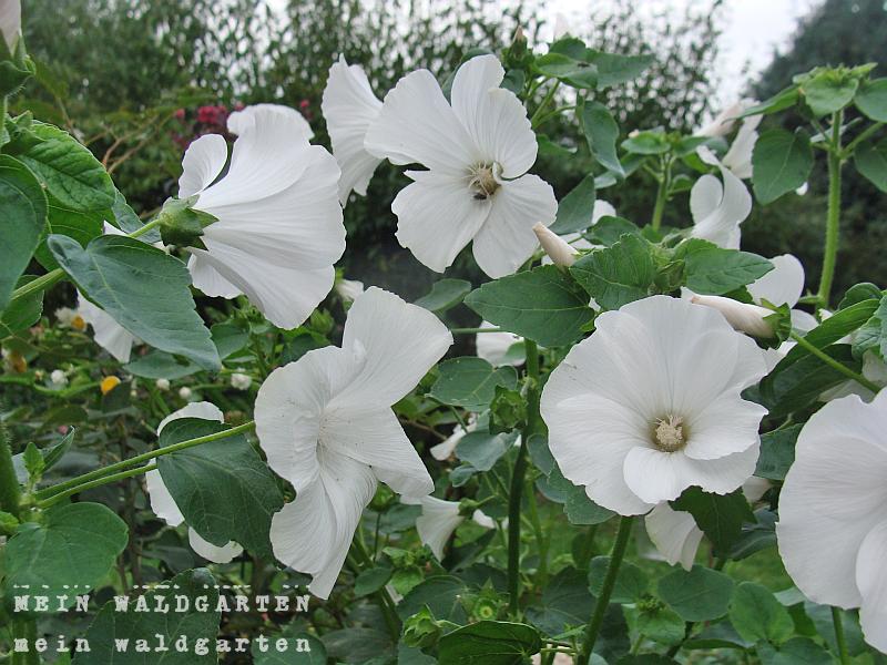 Mein waldgarten 12tel blick im september viel weiss und viel gartenarbeit - Gartenarbeit im september ...
