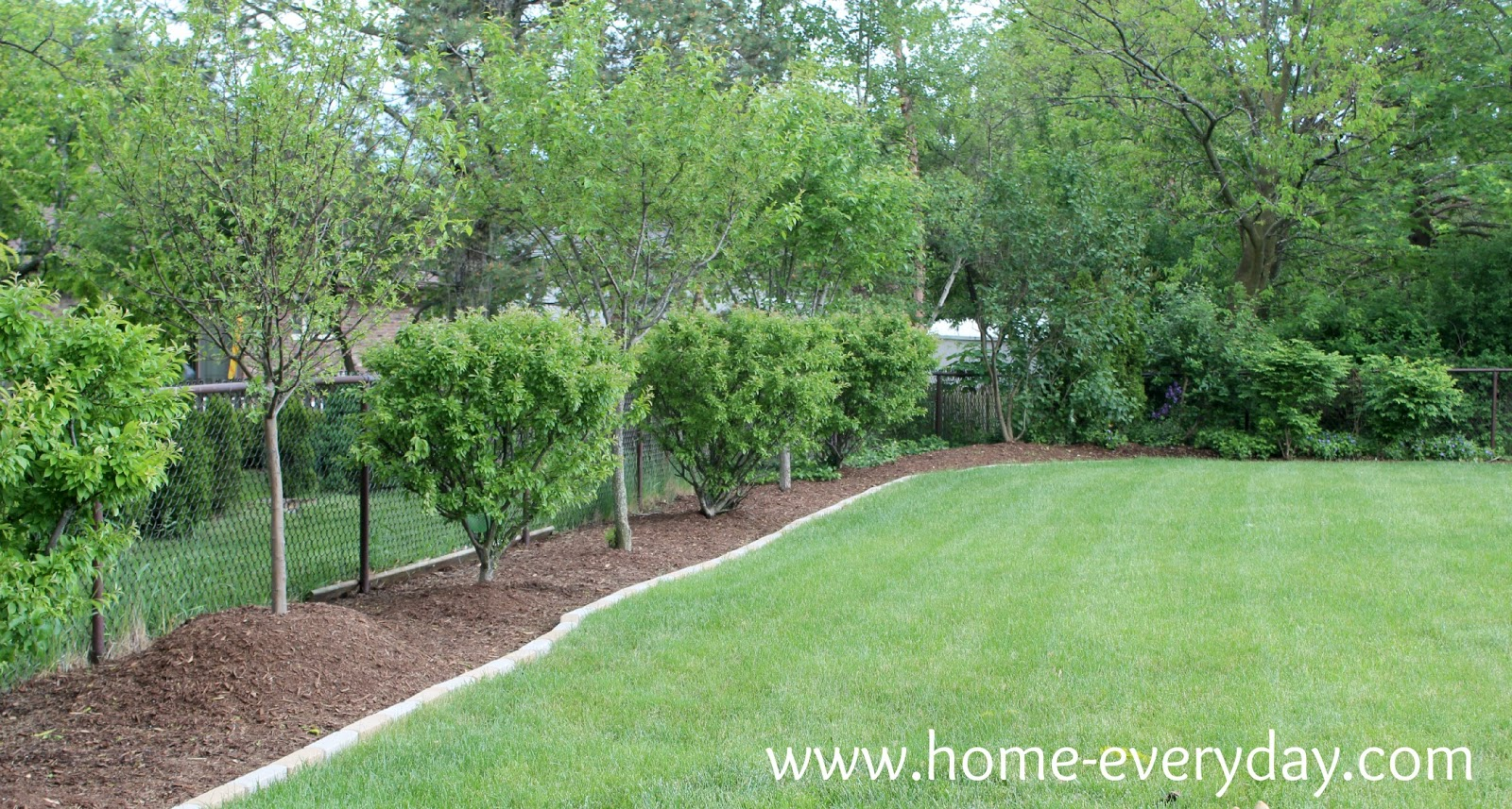 The backyard in all its glory home everyday for Trees for back garden
