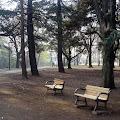 ベンチ,代々木公園〈著作権フリー画像〉Free Stock Photos