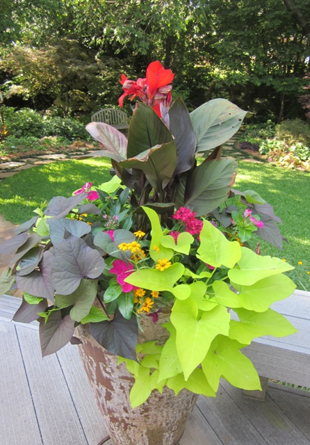 Signature gardens containers annuals spring summer - Container gardens for sun ...
