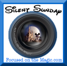 Silent Sunday at Focused on the Magic