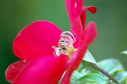 Värit: Aniliininpunainen