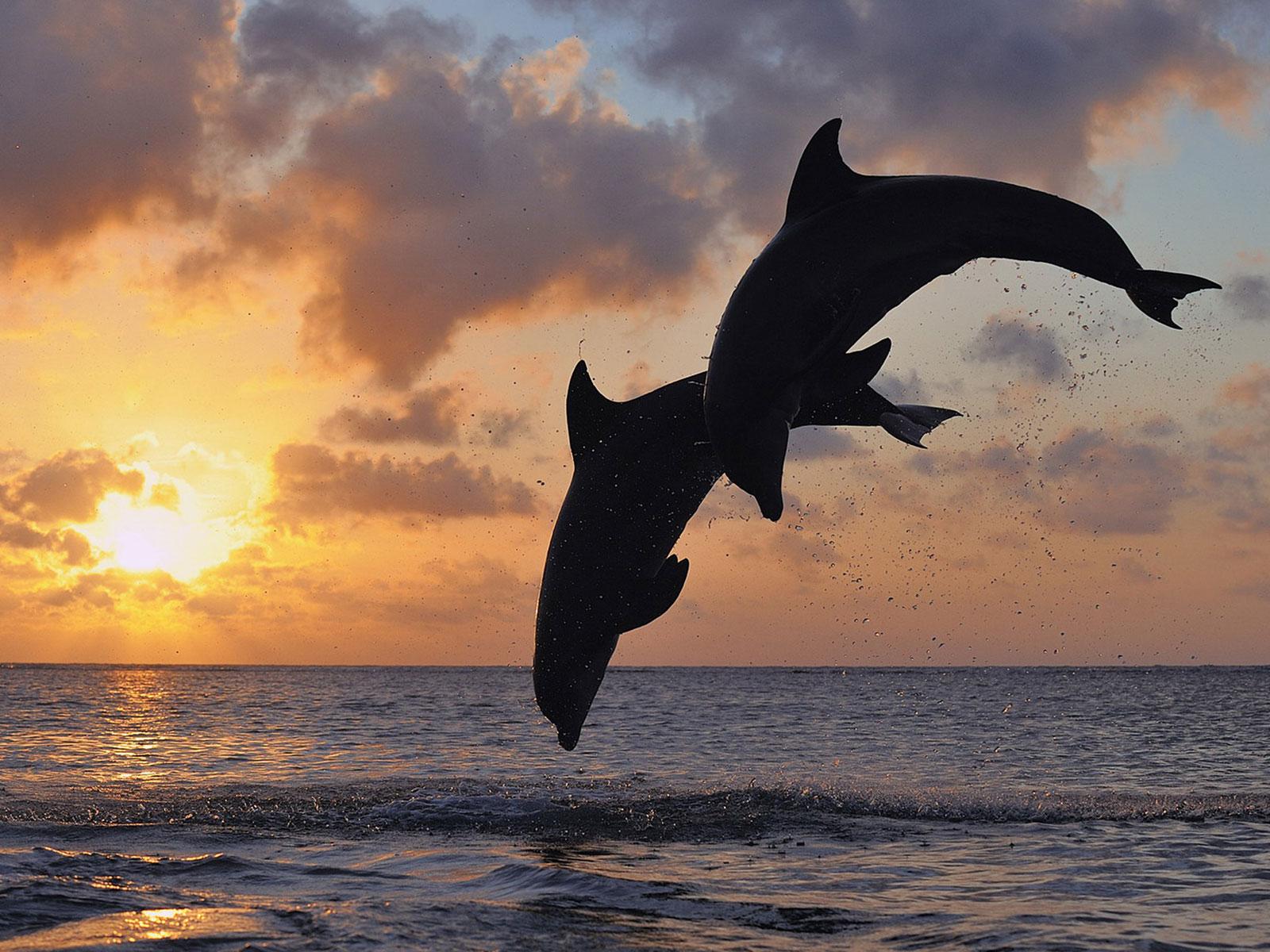 Foto frontera siluetas de delfines saltando en el oceano