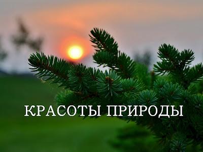 красоты природы елка на закате