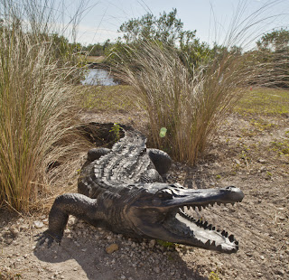 The Dangerous American Alligator
