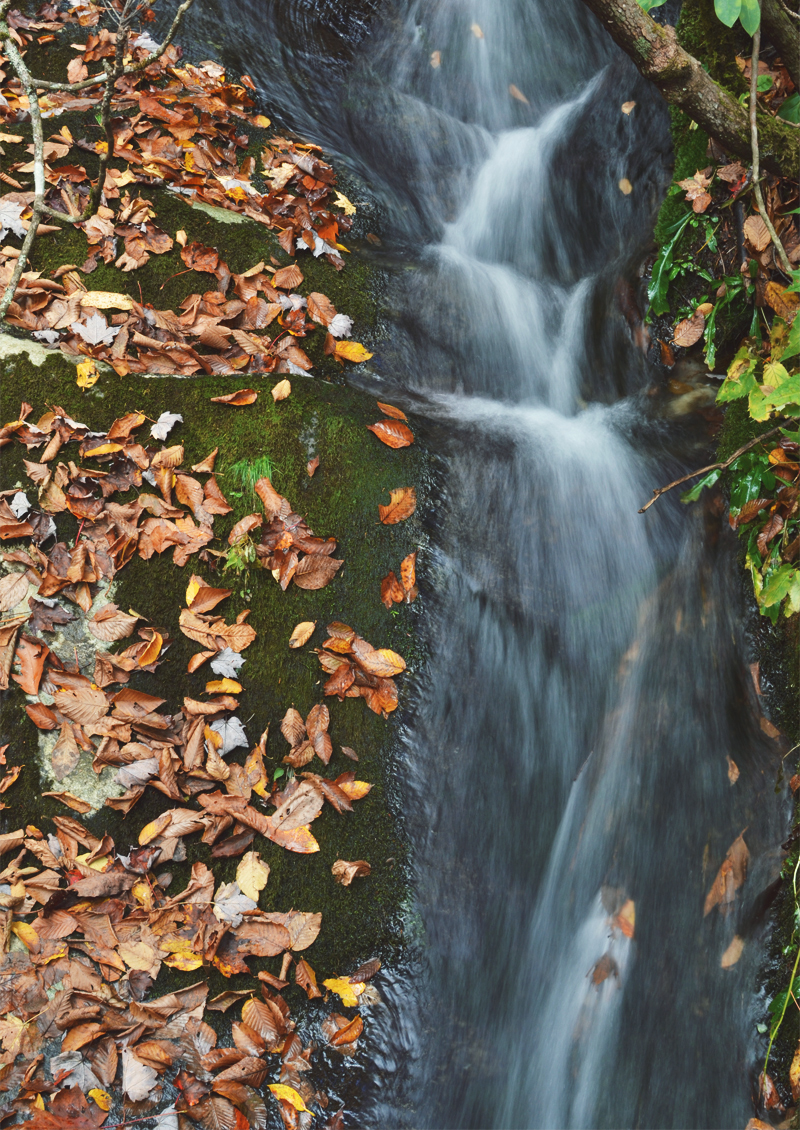 The Flying Clubhouse: Rough Ridge in October   Waterfall