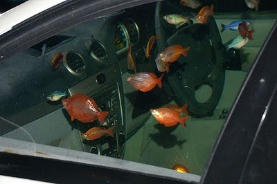 amazing magazine car turned into a fish tank aquarium