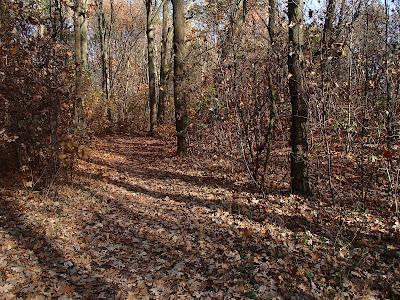 Zakrzówek, grzyby w listopadzie, grzyby zimowe, zimówka aksamitnotrzonowa, płomiennica zimowa, Flammulina velutipes, czernidłak kołpakowaty Coprinus comatus