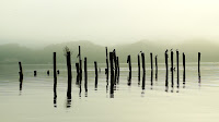 another angle of Birds circle old dock posts on a misty morning at the bay