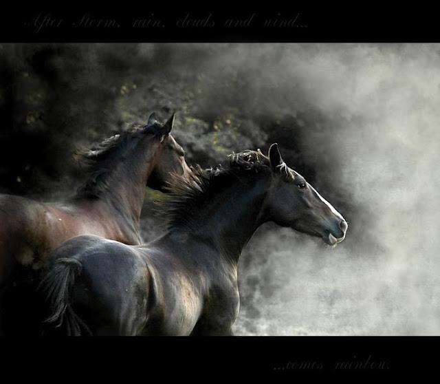black horse_wallpaper_hd