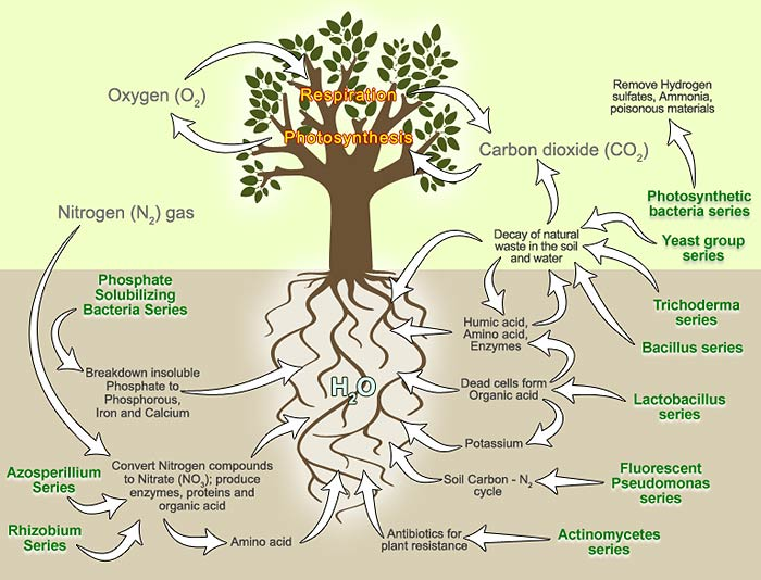 Effective microorganism em em application agriculture for Soil uses and its importance