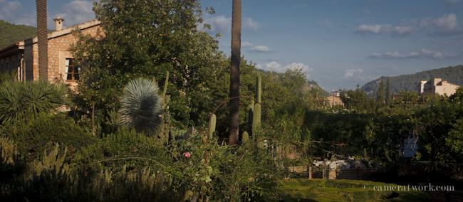 Jardin bot nico de s ller s ller botanic garden for Jardin botanico soller