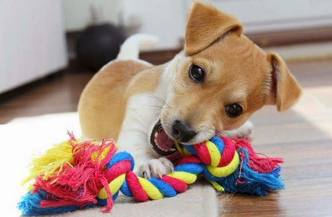 Jak zorganizować psu czas nie wychodząc z mieszkania?