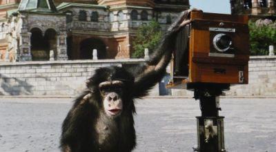 Foto seekor simpanse bernama Miki dan kamera antiknya