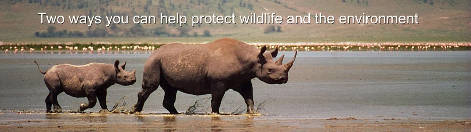 WWF Animal Adoption Rhinoceros