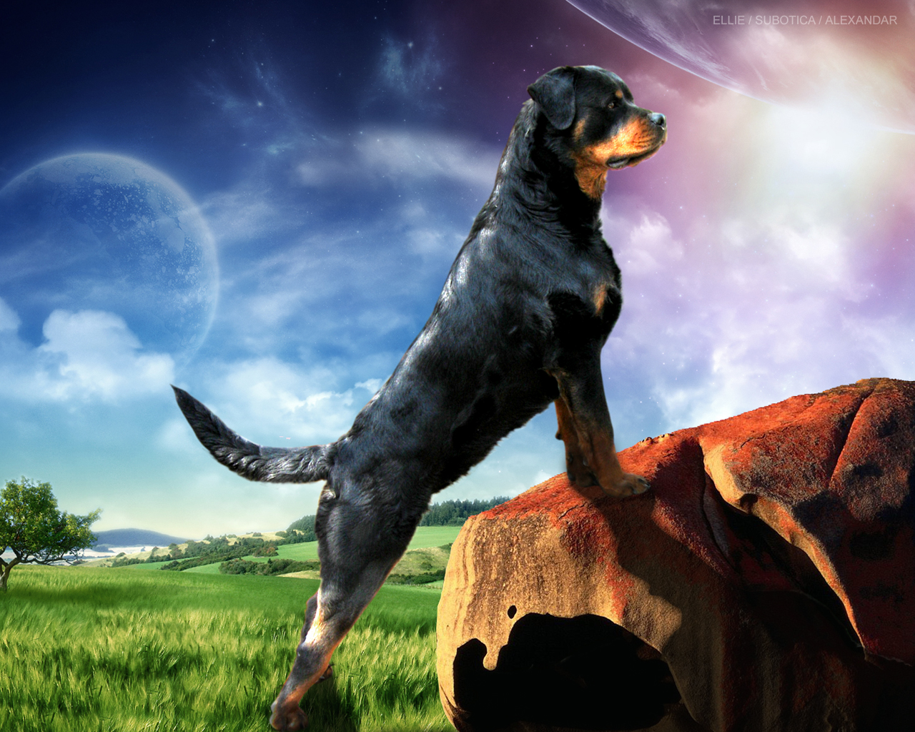 Simple Wallpaper Movie Pets - Guard+Dogs+Wallpapers+5  You Should Have_172460.jpg