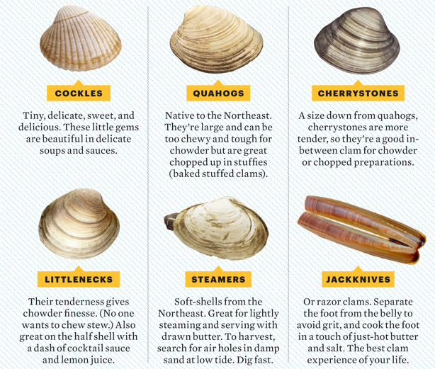 Shellfish Identification Chart | Search Results | Calendar 2015