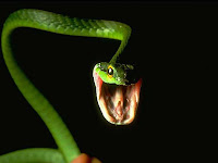 Snakes Picture and Photo 22