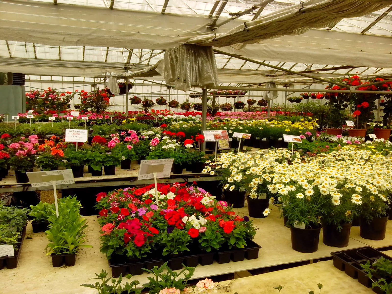 The potting shed uk robs nursery for Walk in greenhouse big lots