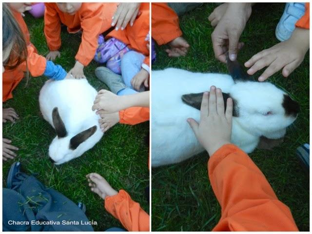 Alumnos con los conejos - Chacra Educativa Santa Lucía