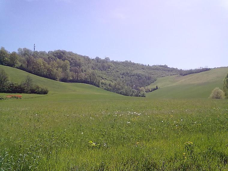 Le colline verdi
