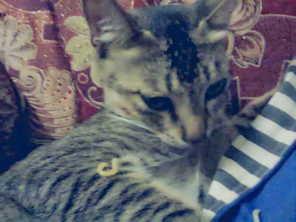 26 Arti Tingkah Laku Dan Kebiasaan Kucing Yang Lucu
