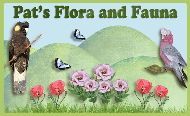 Pat's Flora and Fauna