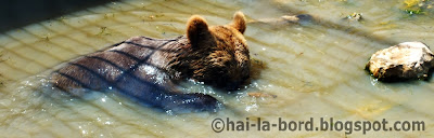 urs balaceala zoo pitesti