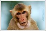 สวนลิงกุมภวาปี