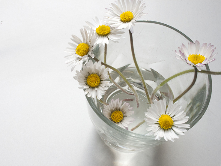daisies in a glass