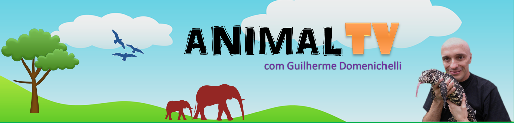 CANAL ANIMAL TV