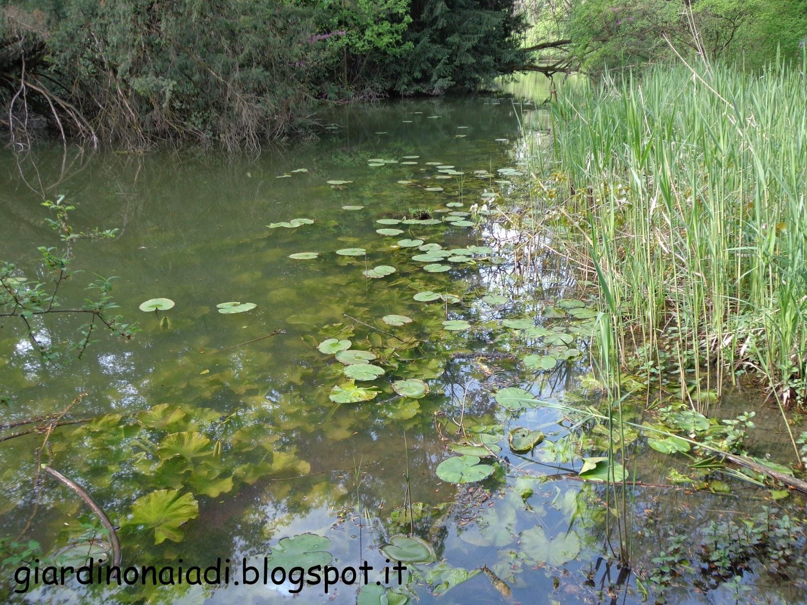 Il giardino delle naiadi un laghetto naturale for Il laghetto