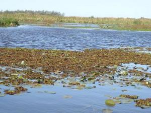 Humedales: Esteros del Iberá