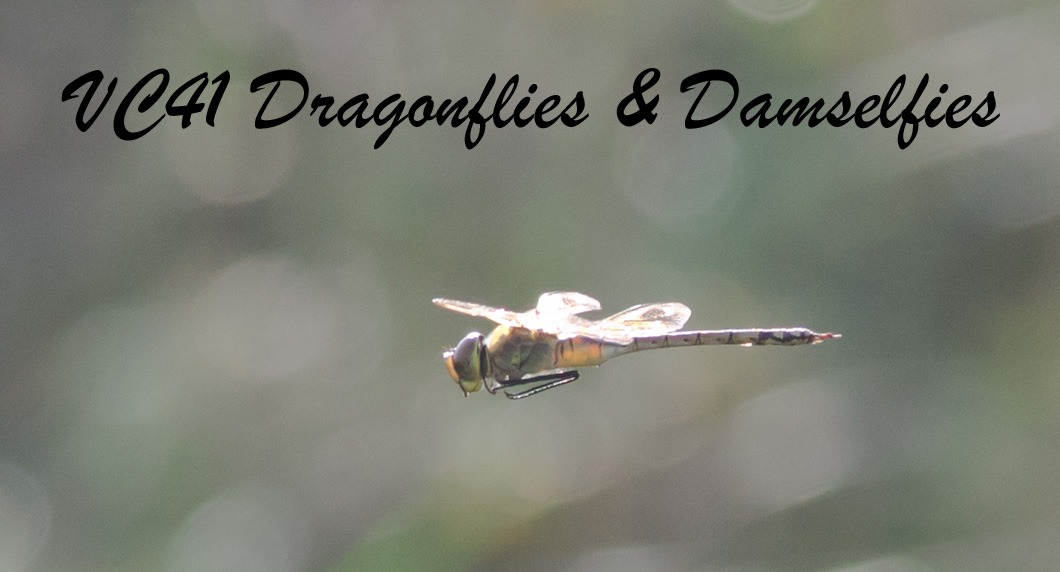 VC41 Dragonflies and Damselflies