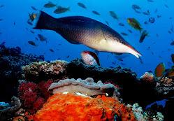 Mergulho no África do Sul