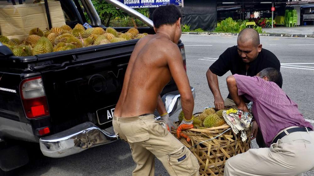 Borong buah durian Balik Pulau