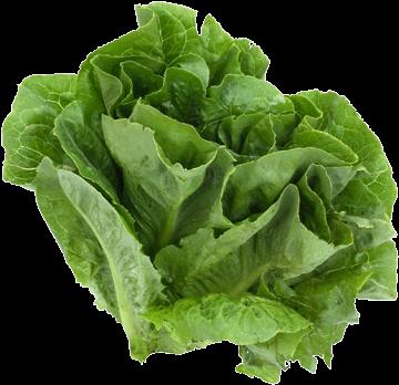 De belles salades dans son jardin for Entretien salade jardin