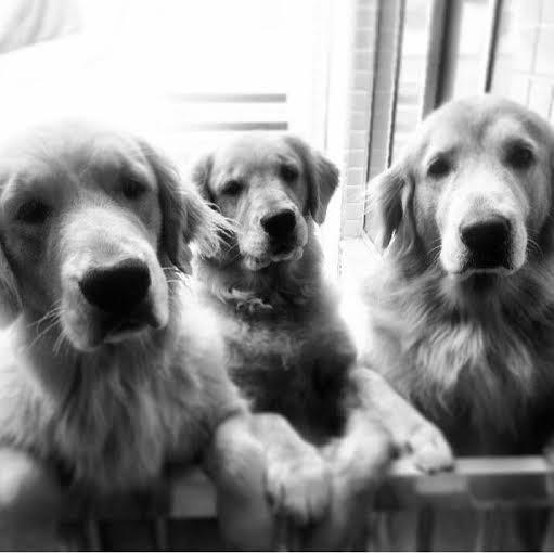Lisa, Lady e Lucky ... da minha amiga Nanci