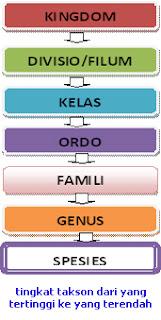 Urutan takson dalam klasifikasi dan contohnya