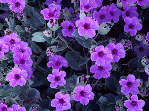 90 a varan indirimlerle ciceksepeti com dan çiçek gurme meyve sepeti