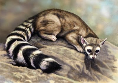 Ring Tailed Cat Amazing Creature Interesting All Facts