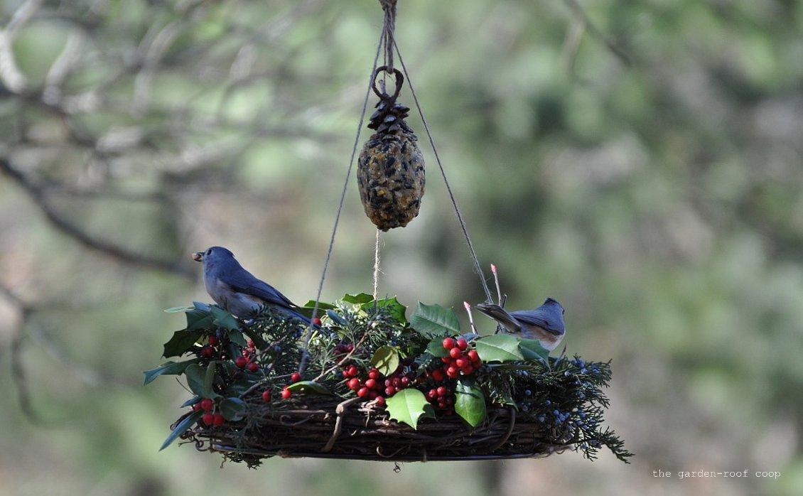 unlimited eliminator carolina watch feeder birds from in bird north feeders the wild