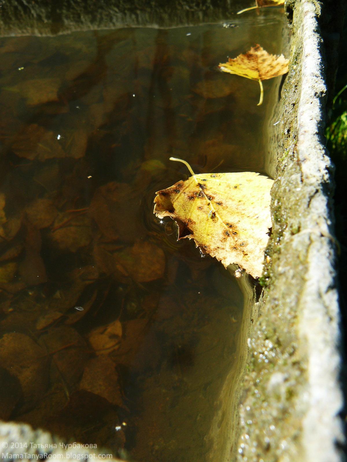осенние листья фото